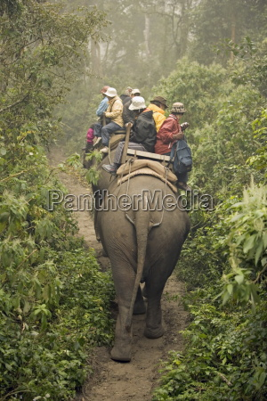 japanese tourists on dawn elephant safari