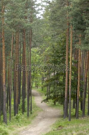 path through pine forest near riga