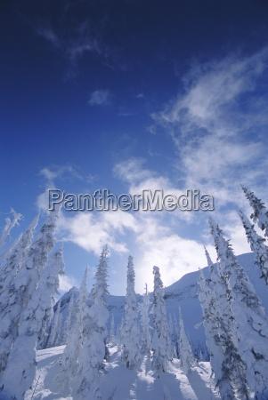 snow on trees rocky mountains alberta