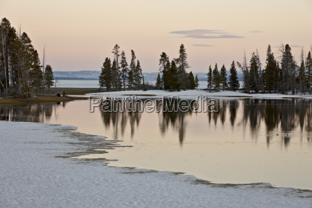 evergreens along yellowstone lake in the