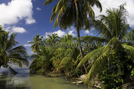 indian river portsmouth dominica lesser antilles