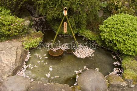 cherry blossom petals in water fountain