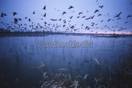 sandhill crane migration platte river nebraska