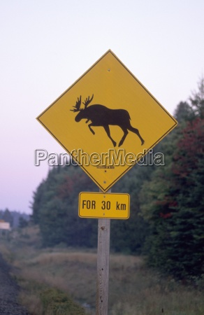sign moose crossing the road algonquin