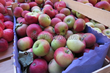 fresh red apples at the food