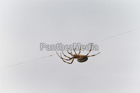 spider on thread cerro dragon santa