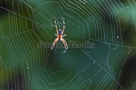 spider in web cerro dragon santa