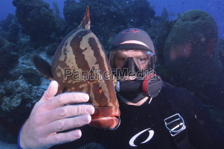 diver with local tame grouper in
