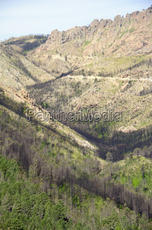 aftermath of major forest fire in