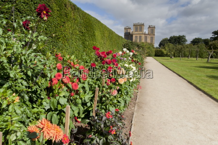 dahlia border pathway and lawn in