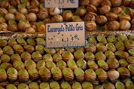 escargot edible land snails for sale