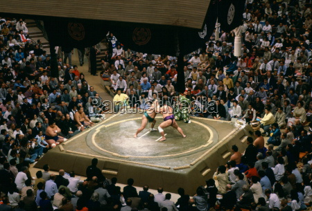sumo wrestlers in the ring watched