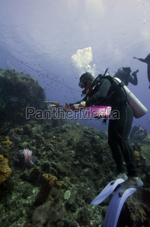 dive guide culling pacific lionfish which
