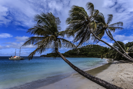 palm trees and deserted beach saltwhistle