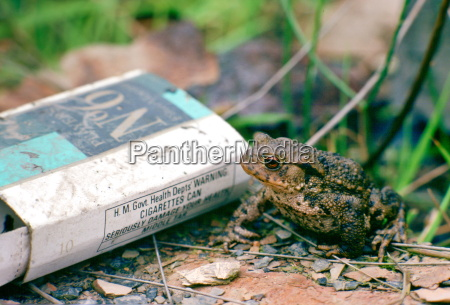 a toad next to a discarded