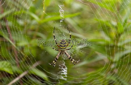 a spider spinning a dew