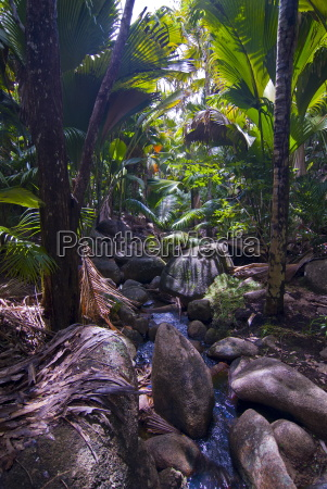 beautiful rocks in the jungle of