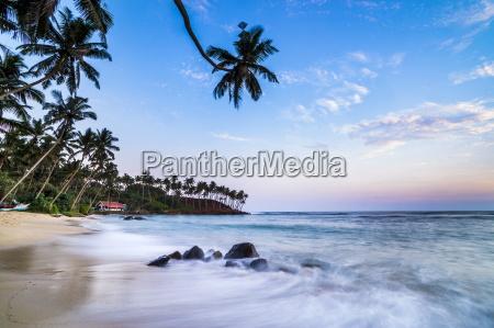 palm tree at sunset mirissa beach