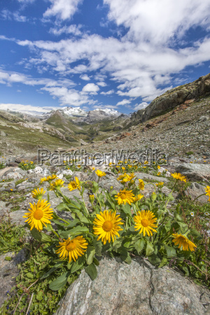 yellow flowers frame the landscape around