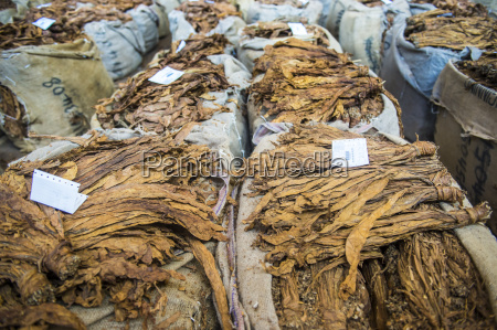 piles of dry tobacco tobacco auction