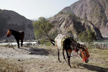 donkeys from brooke hospital for animals