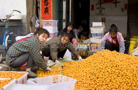 women working to sort kumquats in
