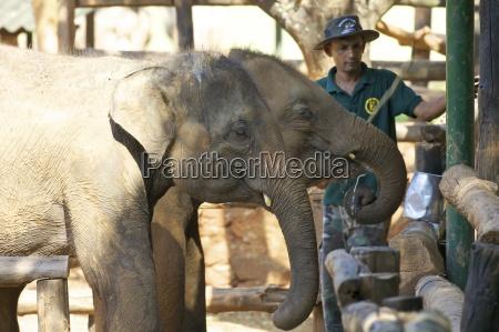 asien elefant tiere horizontal outdoor freiluft