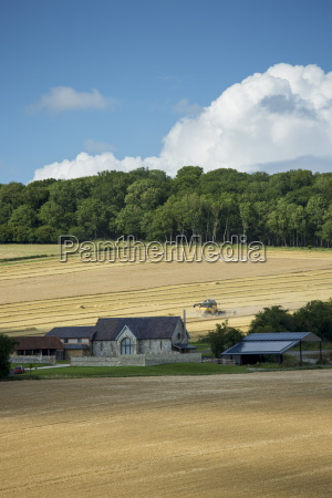 combine harvester at work in a