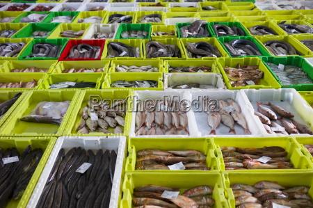 fresh fish at confradia de pescadores