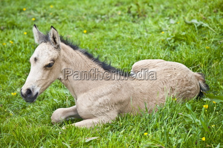 young cute foal in a meadow