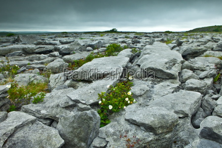 limestone pavement glaciated karst landscape and