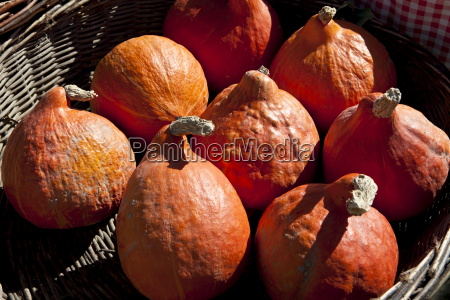 fresh pumpkin petit marron on sale