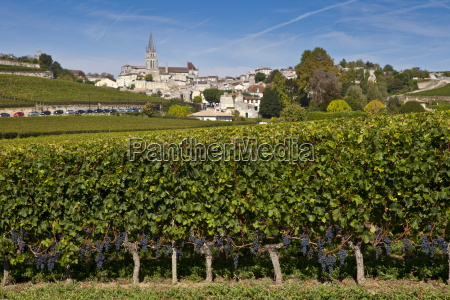 st emilion with vineyard of mouton