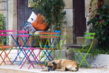 french dog on guard at cafe