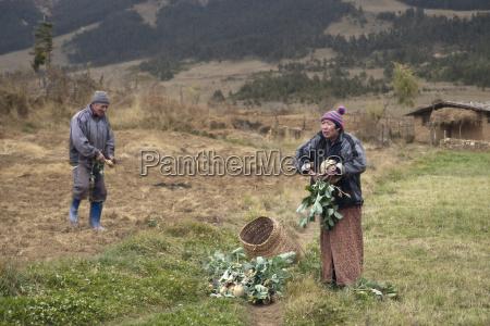 turnip farmers bumthang valley bhutan asia
