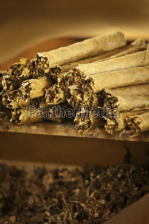freshly rolled cigars at cigarros joyas