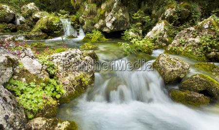 vibrant greens of an alpine stream