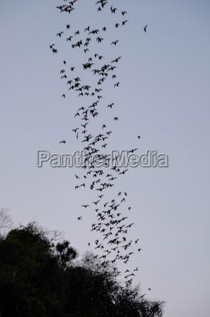bats cave battambang battambang province cambodia
