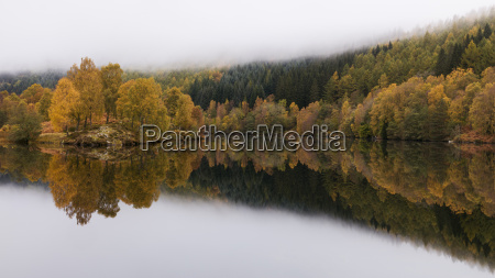 trees in autumn colour reflected like