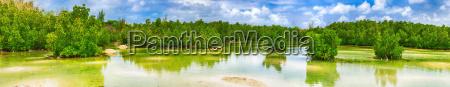 view of mangroves mauritius panorama