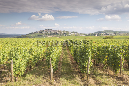 the vineyards of sancerre known for