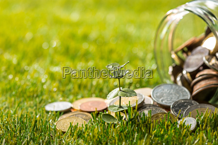 plant growing in coins glass jar