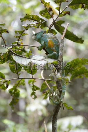 madagascar andasibe mantadia national park parsons