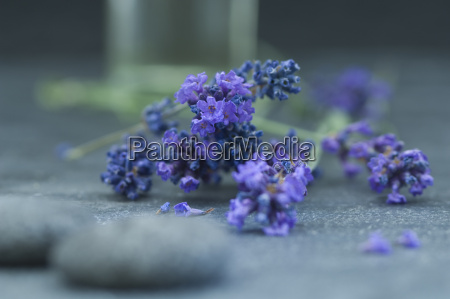 twigs of lavender grey pebbles and