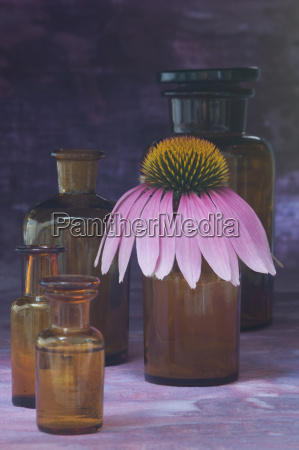 purple coneflower echinacea purpurea apothecary flasks