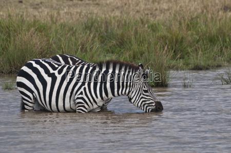 kenya rift valley maasai mara national
