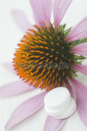 purple coneflower echinacea and three white