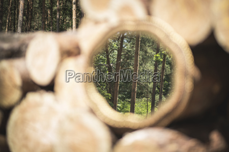 mirror image of trees in the