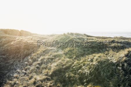denmark henne strand dune landscape