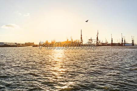 germany hamburg seagull flying over harbour